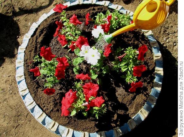 В клумбу высажено пять растений