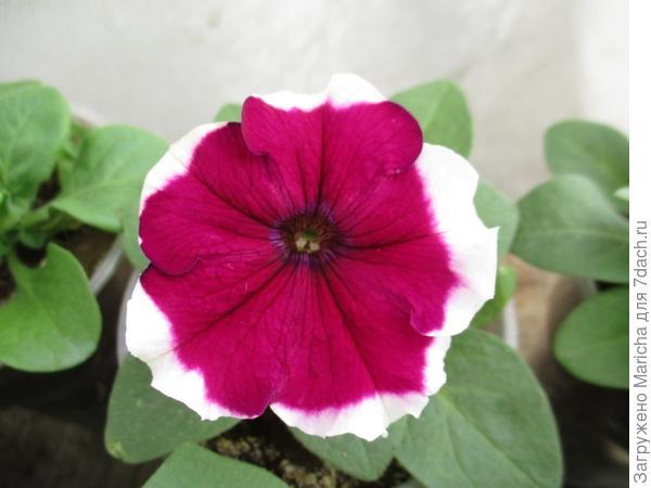 Первое цветение. 10 мая