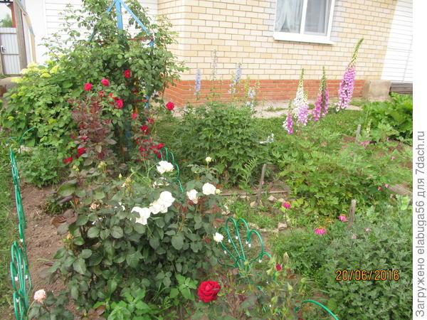розы, наперстянка и отцветает делбфиниум