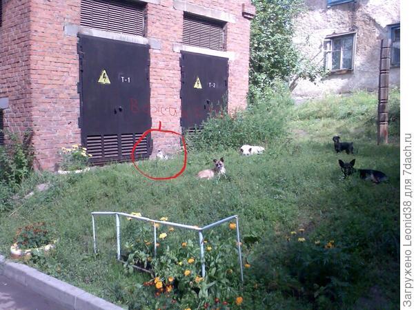 Снимок сделал в Иркутске, стая собак грелась на солнце, вместе с котом.