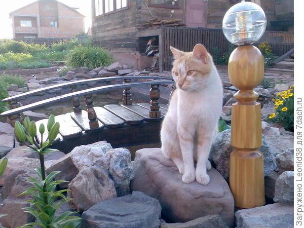 Масяня был любимцем. Умный, очень ласковый, жаль, пропал. Коты долго не живут в доме, а кошка мать его до сих пор с нами Муся. Коты котуют-гуляют, кошки всегда дома.