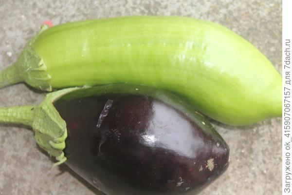 Зелёненький и марципан
