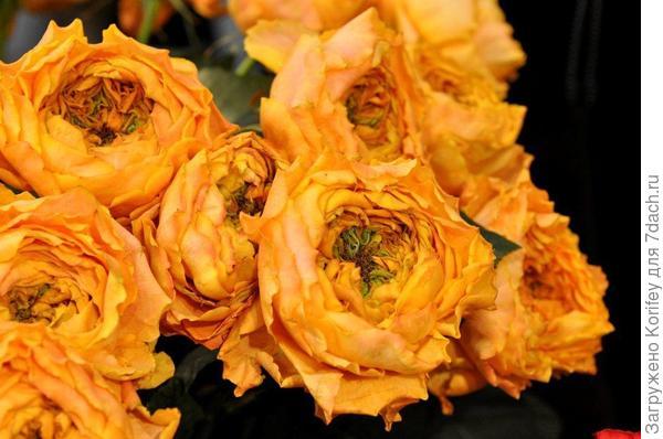 """Оранжевая """"ананасная"""" роза"""