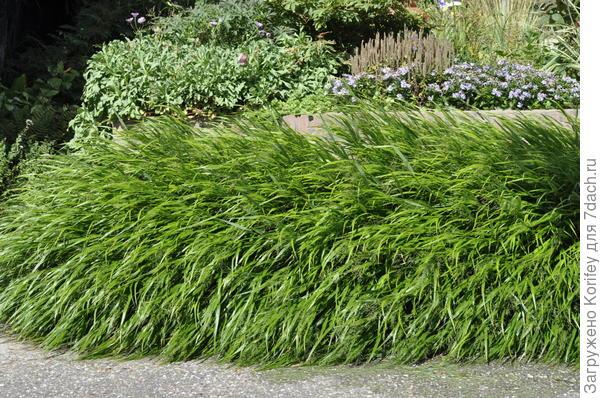 Декоративные травы 2