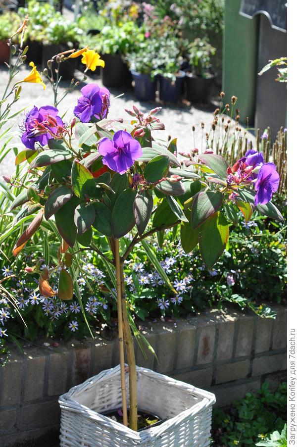 растение в полный рост