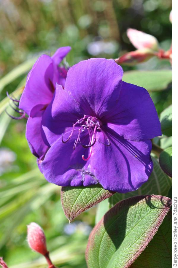 цветок близко