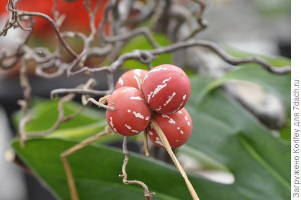 неизвестные ягоды
