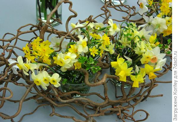 Daffodill composition_DSCN0509