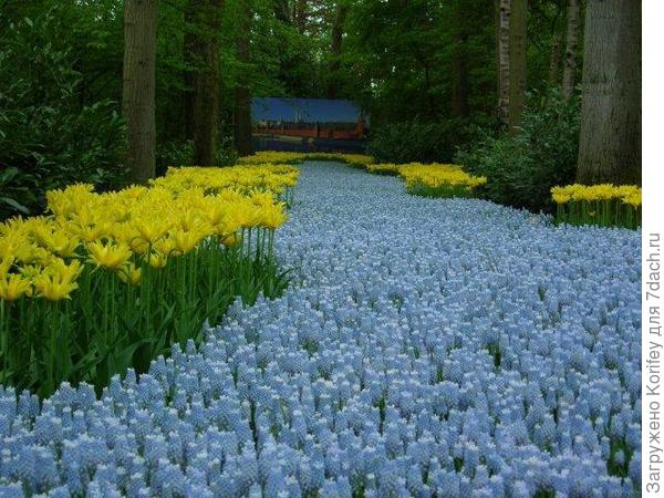 Ocean Magic + Tulip Yellow Spider_DSCN2939