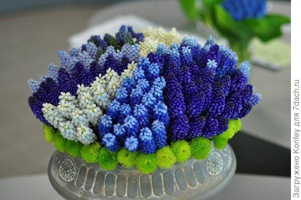 Букет из разных сортов и расцветок мускари