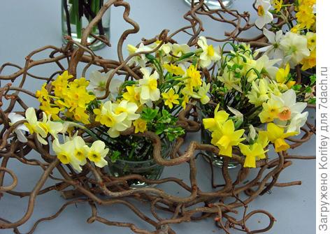 Daffodill composition_DSCN0509_small