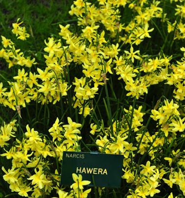 Hawera_DSC_8005_small