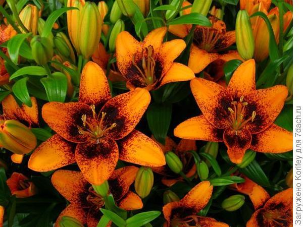 Oranje Pixels_AT_DSCN7746