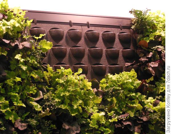 Дорогие садоводы! Вот недавно видел вот такую систему для вертикальных клумб и вертикального озеленения. Выпускается промышленно. Состоит из отдельных блоков, которые вы сами выбираете и устанавливаете по Вашему вкусу и необходимости. Воду можно наливать самостоятельно или с помощью специально монтирующихся пластиковых труб (водопровода). В каждой ячейке есть специальный резервуар для воды и специальная водопроводящая ткань, которая увлажняет все ячейки в каждом блоке. Соответственно, в каждую ячейку Вы можете посадить любое понравившееся Вам растение, которое согласится расти в ограниченном объеме, равном примерно 700 — 1200 мл. Это диапазон возможных одинарных ячеек в каждом блоке. Как видите, при надлежащем и хорошем уходе все выглядит очень даже красиво и аккуратно и не видно ни труб, ни самого каркаса из ячеек. А сажать можно все — от вьюнов до клубники, салата,  миниатюрных помидоров, гейхер, гейхерелл и петуний. Удачи всем!  Вертикальное озеленение