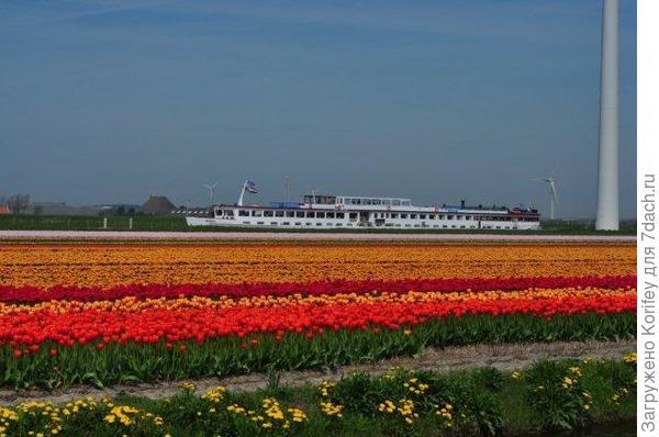 Для начала несколько фотографий с голландских полей