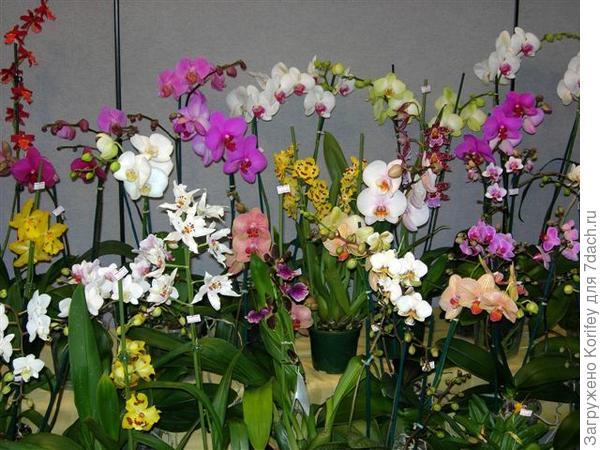 Ну и общий вид на мои орхидеи