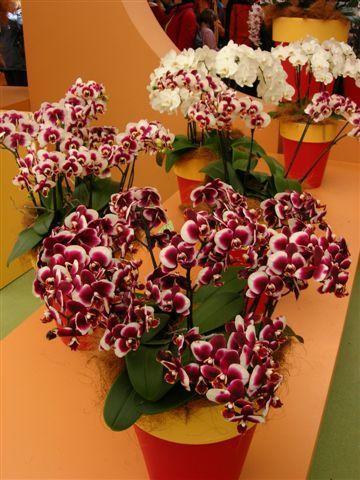 Или вот такая ещё пестрая окраска по всему цветку
