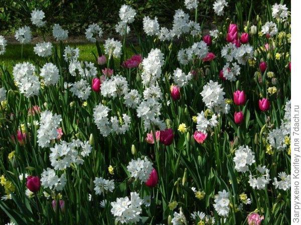 Paper White + Minnow + China Pink + Peach Blossom + Lilac Wonder_DSCN8648