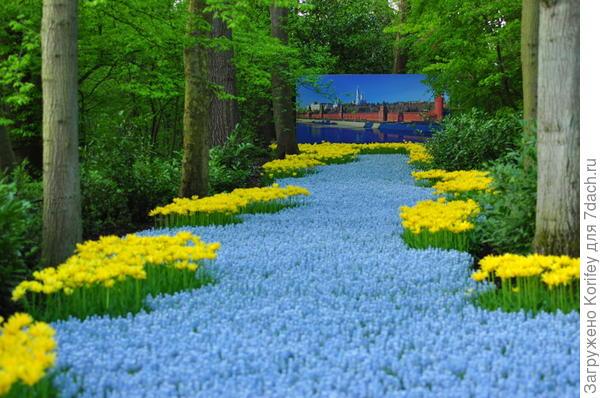 Ocean Magic + Tulip Yellow Spider_DSC_7447