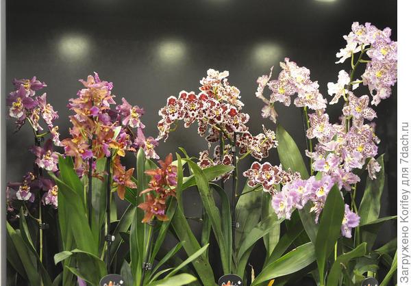 Красивейшие орхидеи