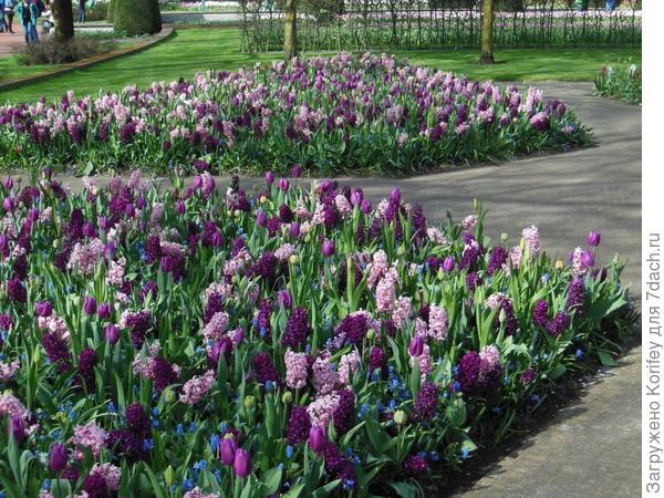 Весенние луковичные в розово-бордовых тонах