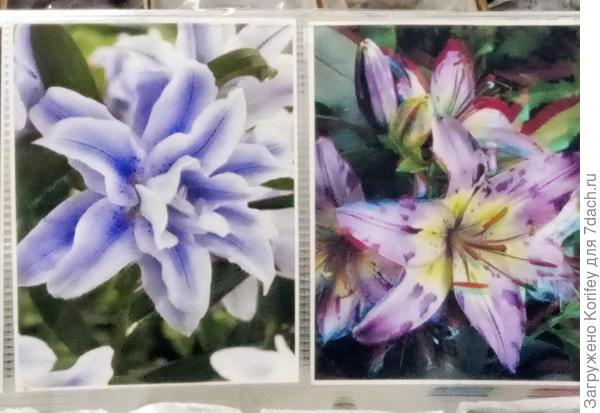 Вот второй пример как подкрашивают лилии