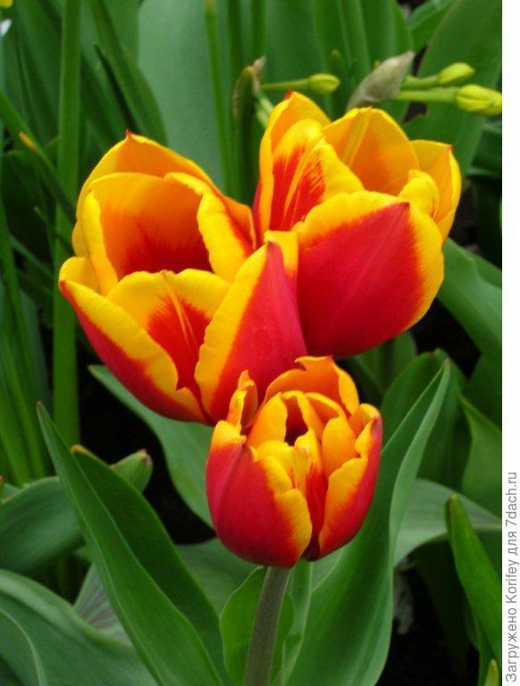 Многоцветковый триумф Andre Citroen