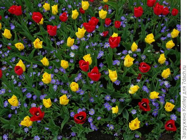 Или вот так, тоже на фоне anemona blanda