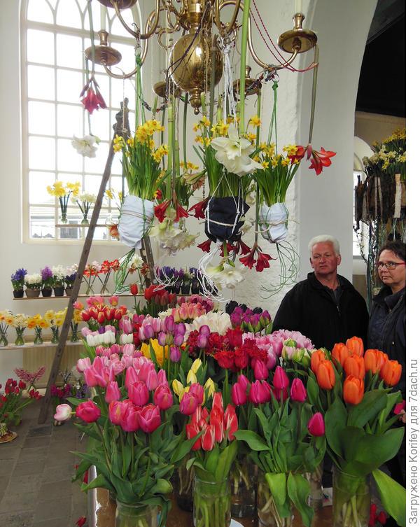 Сорта тюльпанов просто завораживают, и не только приезжих туристов, но и видавших виды местных жителей
