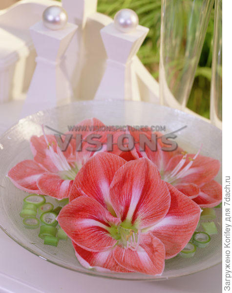 Фото тоже с сайта www.visionspictures.com