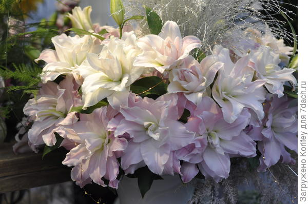 Роуз-лилия Эдита