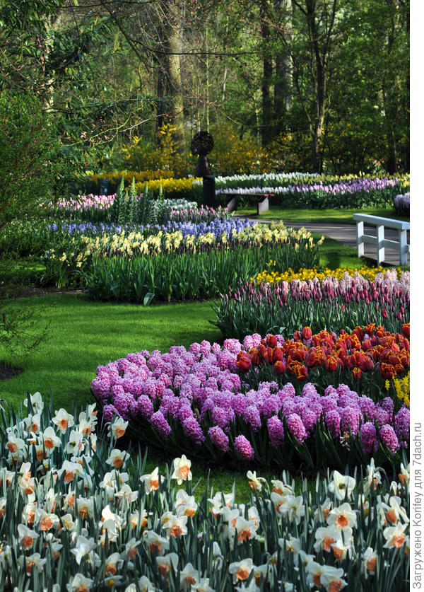 Вариант с белыми нарциссами, бахромчатыми тюльпанами и темно-розовыми гиацинтами