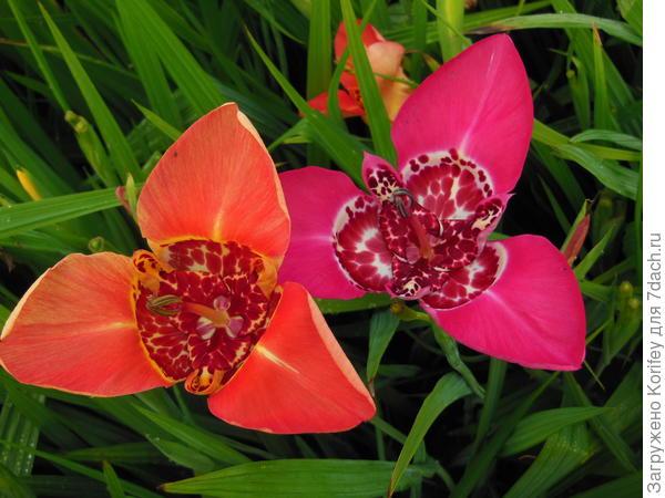 Два цветка рядом
