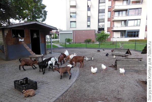 Это тоже Голландский дворик, причем прямо среди многоэтажек. Вам тут и детская площадка рядом, и контактный зоопарк, да и просто приятно постоять рядом. Картинка из детства -:)