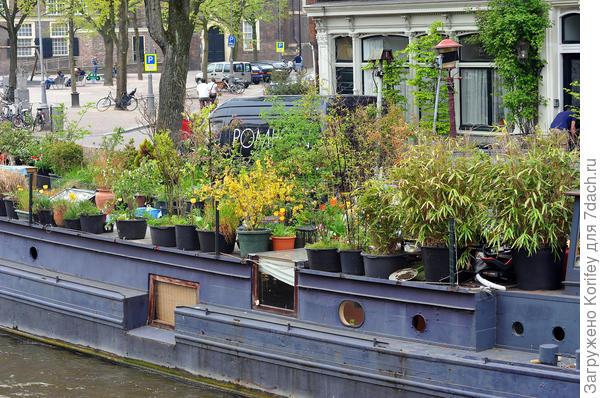Голландцы даже на старой барже тоже умудряются выращивать самые разные цветы и кустарники. Обратите внимание, цветет даже форзиция!