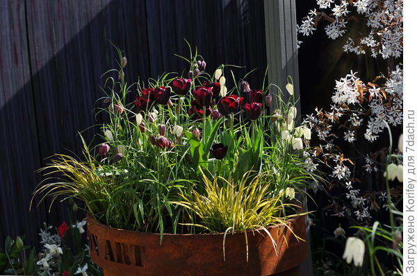 Даже старую ржавую бочку, стоящую в углу садового участка и то, можно с умом и красиво использовать