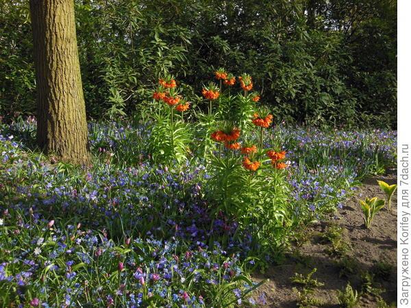 В эту клумбу кроме уже имеющихся ботанических тюльпанов, вполне можно добавить и любые другие гибридные сорта