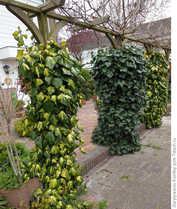 Варианты с вертикальным озеленением