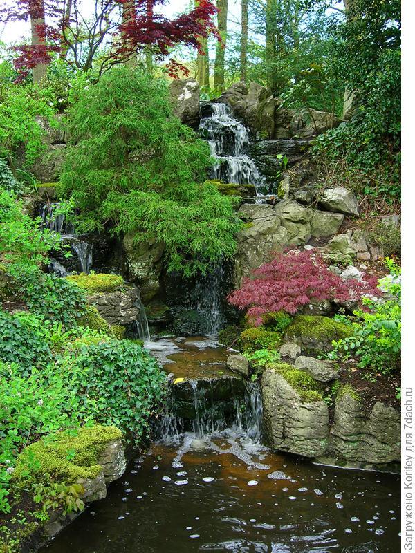 У водопада, да и просто у любого водоема будут всегда красиво смотреться плакучие дланевидные клены