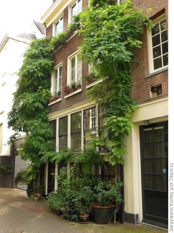 Или вот ещё вариант такой же идеи вертикального озелениния