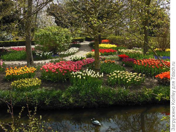Приусадебная территория с множеством самых разных тюльпанов и нарциссов