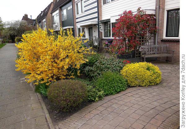 Краснолистные аккуратно стриженные кустарники или яркий куст всегда будут уместно смотреться в любом саду