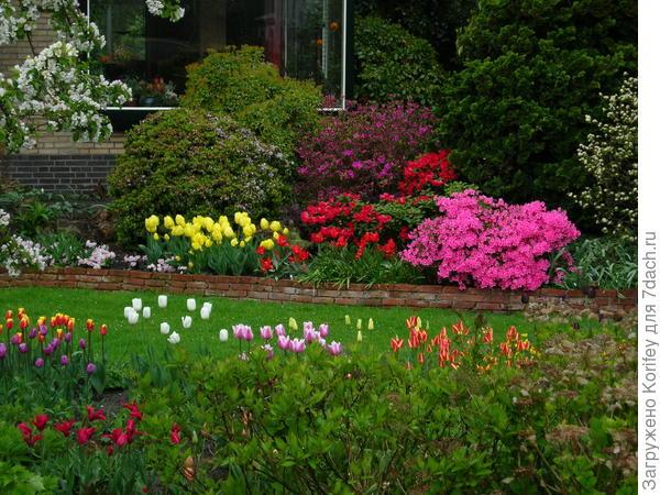 Еще один сад с луковичными, азалиями и прочими красивостями