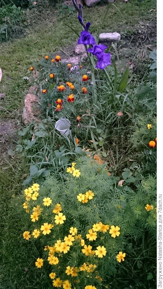 Желтый фиолетовый оранжевый