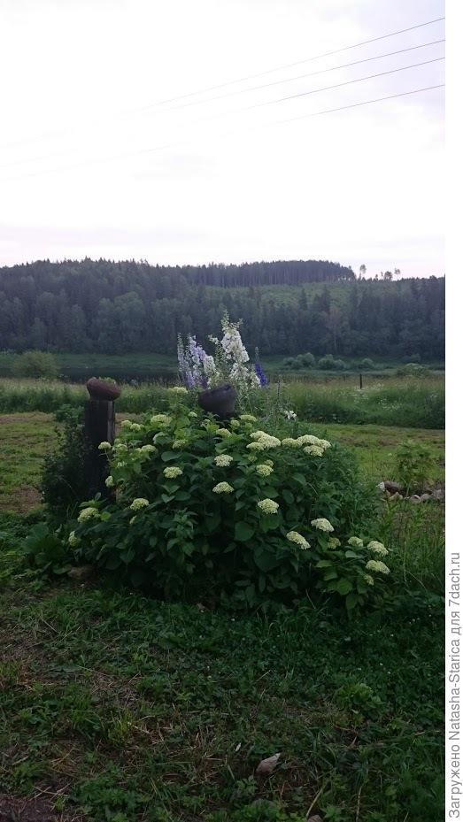 Столбы от бывшей калитки...и цветы