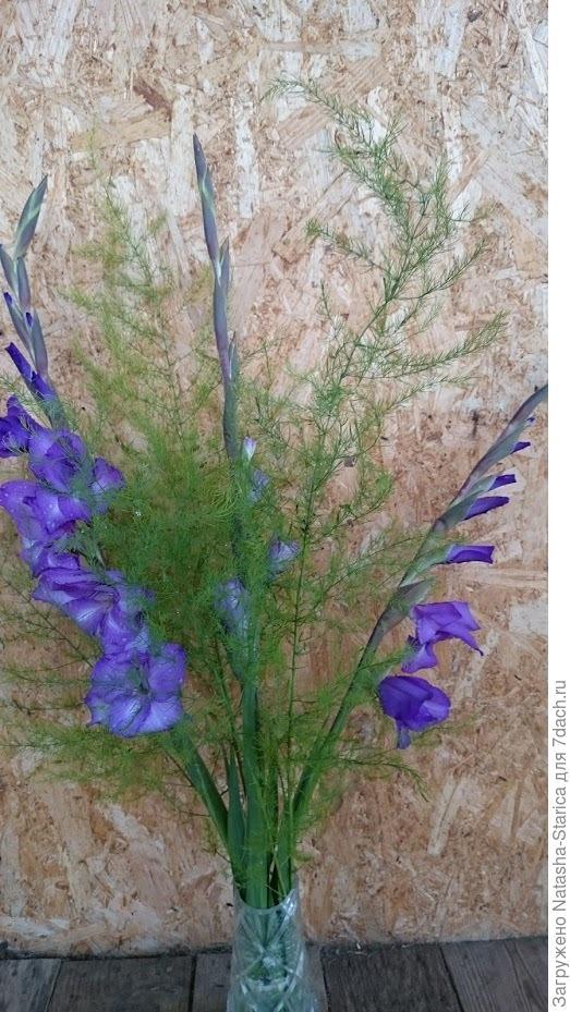 Фиолетовые гладиолусы
