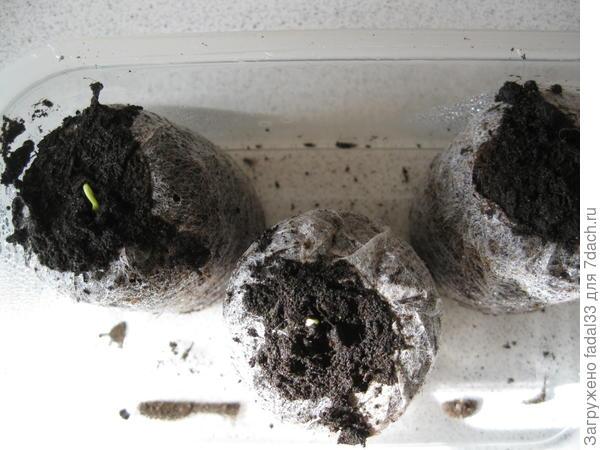 Семена в таблетках