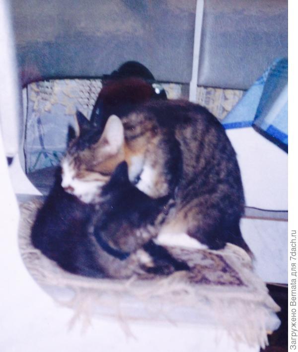 Сонька и Аишка