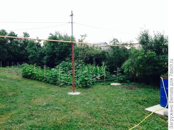 мой первый огород