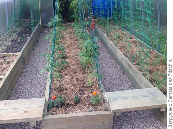 Слева: дальняя грядка - маленькие кустики томатов, ближняя- перцы. Посередине- в стадии цветения, справа- уже с помидорчиками...